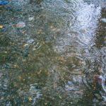 梅雨の季節の雨対策!SNS映えする子供用のカッパ、ポンチョ、レインコート6選!